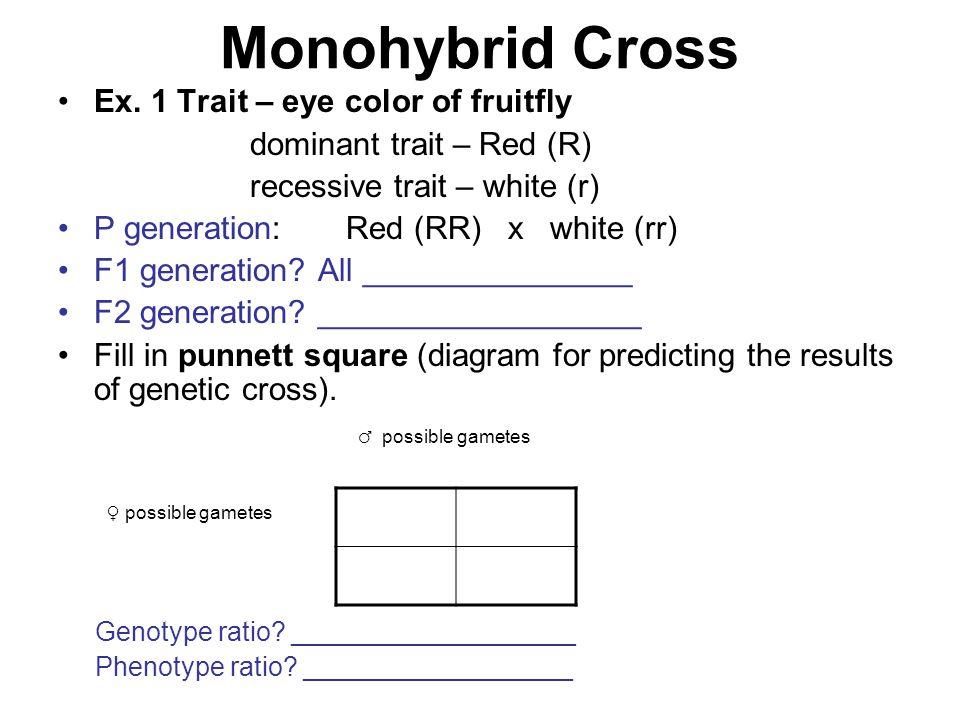 Monohybrid Cross Ex. 1 Trait – eye color of fruitfly
