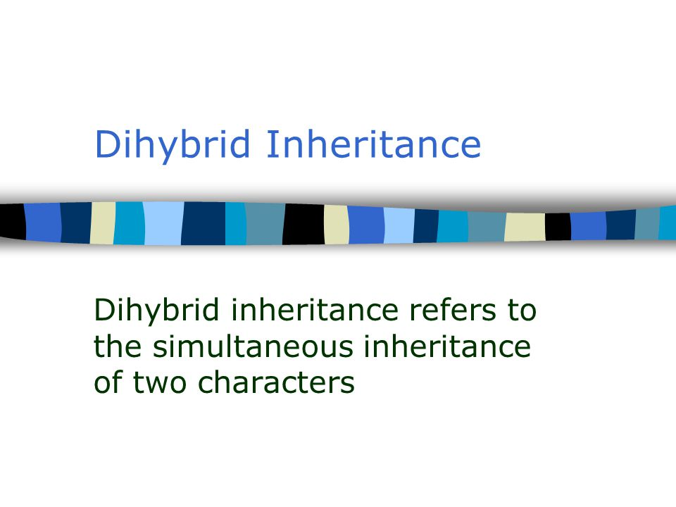 Dihybrid Inheritance Dihybrid inheritance refers to the simultaneous inheritance of two characters
