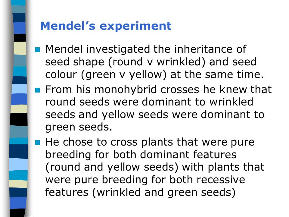 Mendel's experiment Mendel investigated the inheritance of seed shape (round v wrinkled) and seed colour (green v yellow) at the same time.