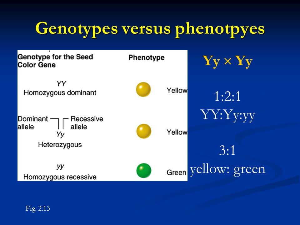Genotypes versus phenotpyes