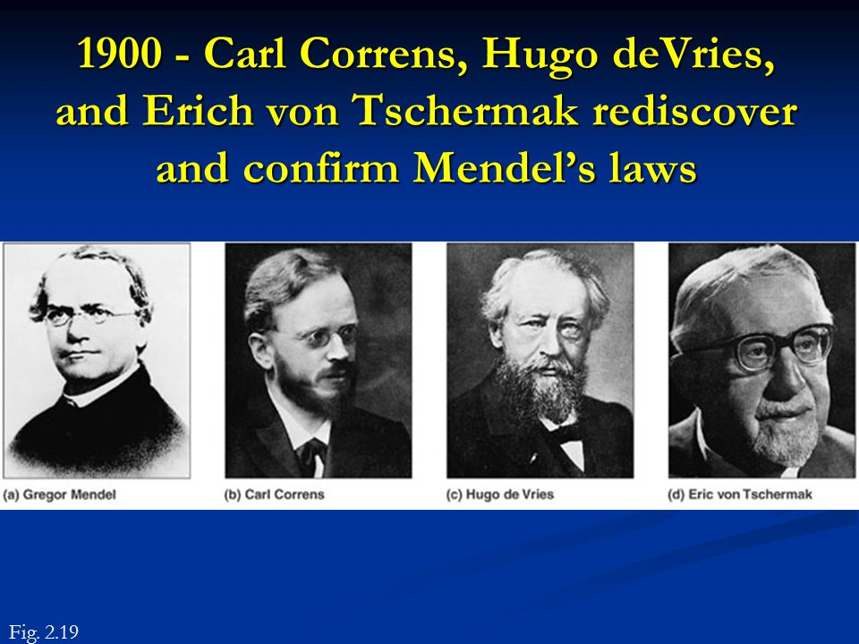 1900 - Carl Correns, Hugo deVries, and Erich von Tschermak rediscover and confirm Mendel's laws