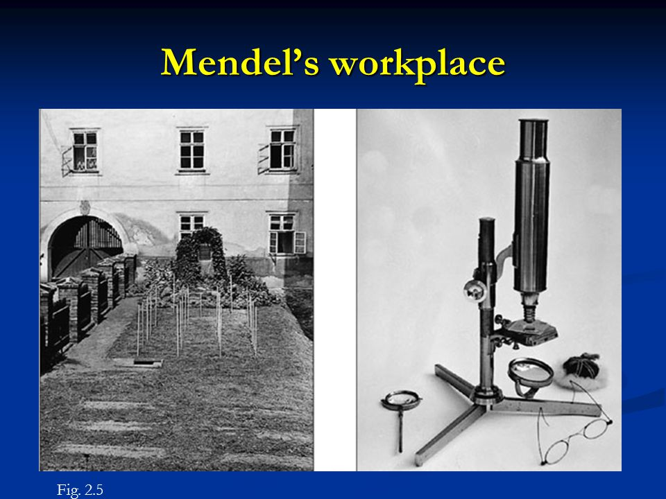 Mendel's workplace Figure 2.5 Fig. 2.5