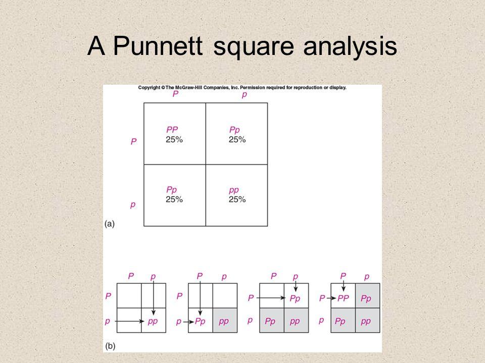 A Punnett square analysis