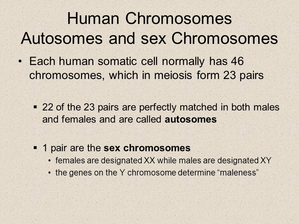 Human Chromosomes Autosomes and sex Chromosomes