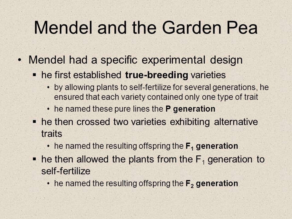 Mendel and the Garden Pea