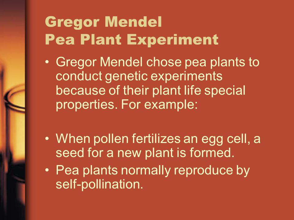 Gregor Mendel Pea Plant Experiment
