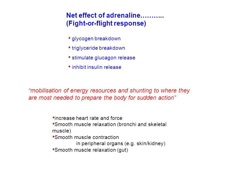 Net effect of adrenaline……….. (Fight-or-flight response)
