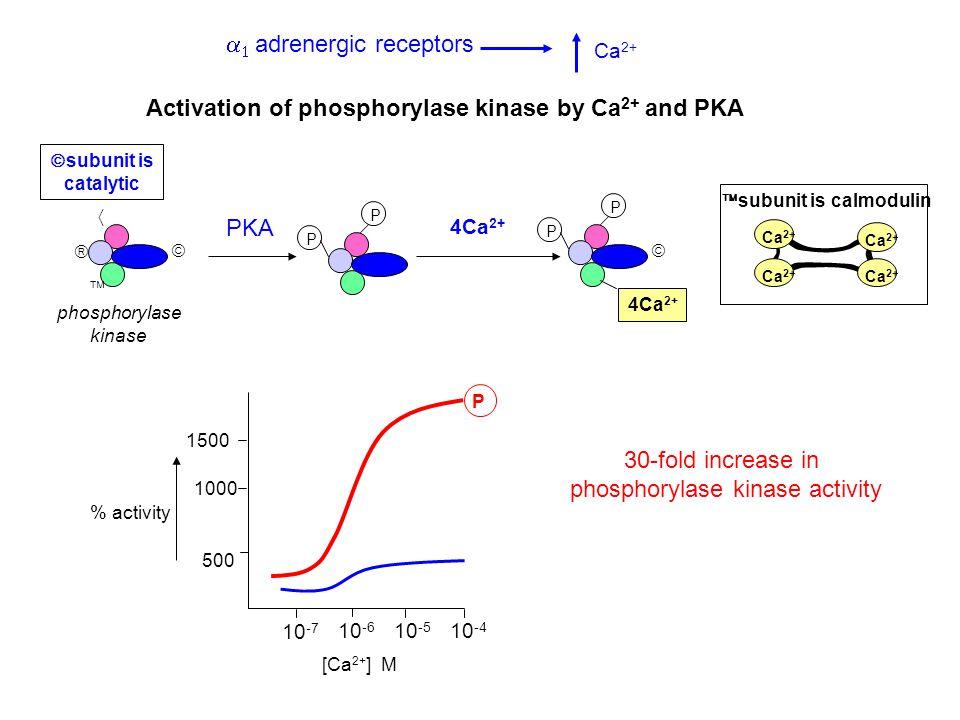 phosphorylase kinase activity