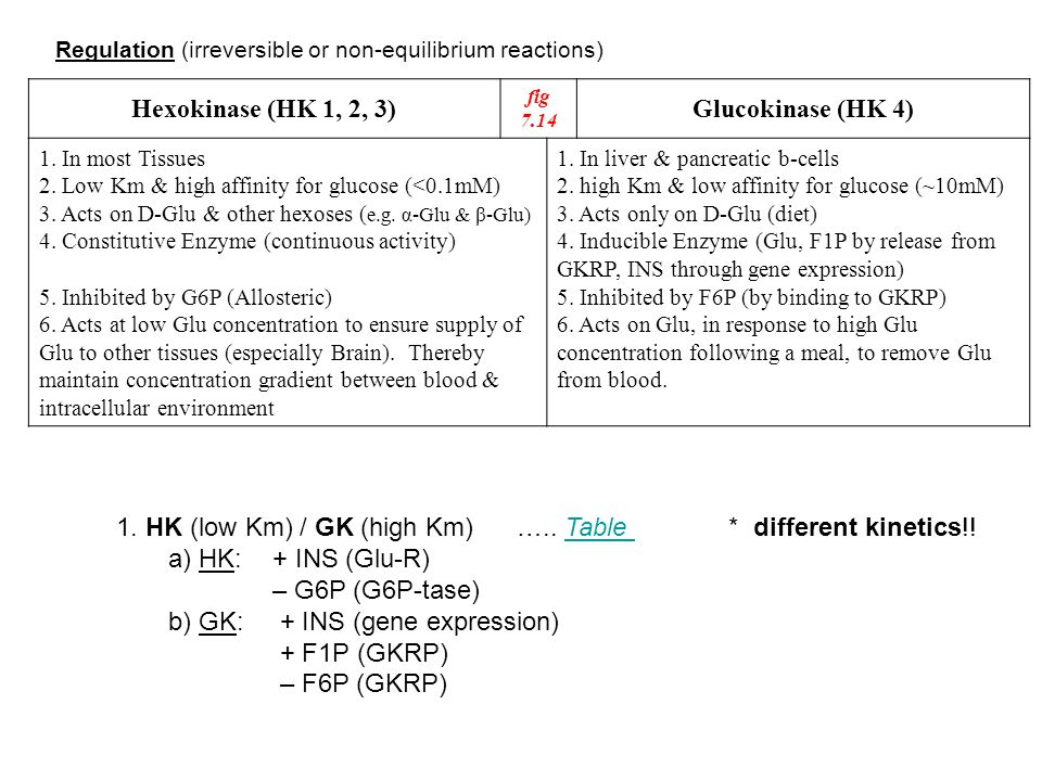 Glucokinase (HK 4) Hexokinase (HK 1, 2, 3)