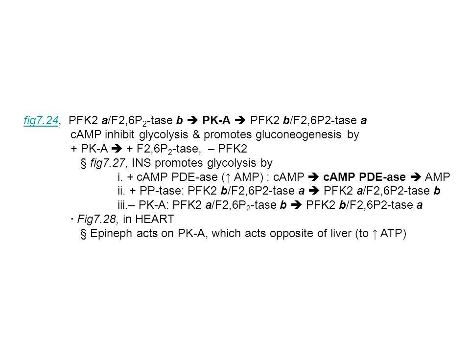 fig7.24, PFK2 a/F2,6P2-tase b  PK-A  PFK2 b/F2,6P2-tase a