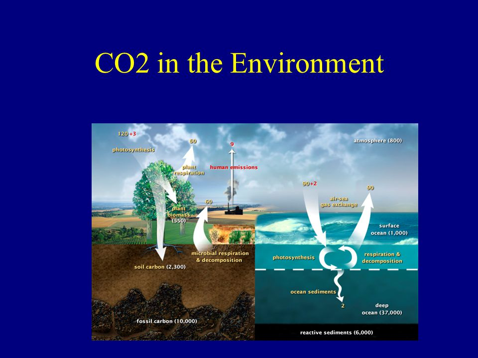 CO2 in the Environment
