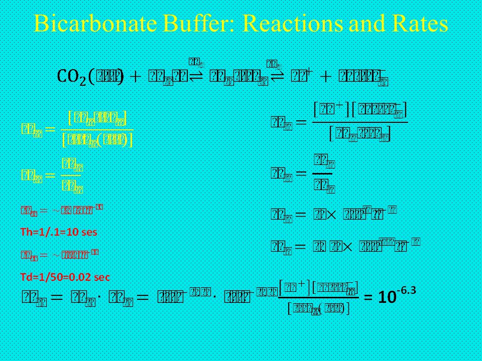 Bicarbonate Buffer: Reactions and Rates