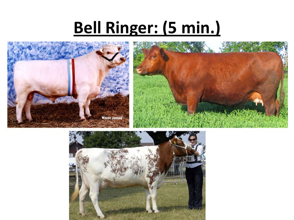 Bell Ringer: (5 min.)