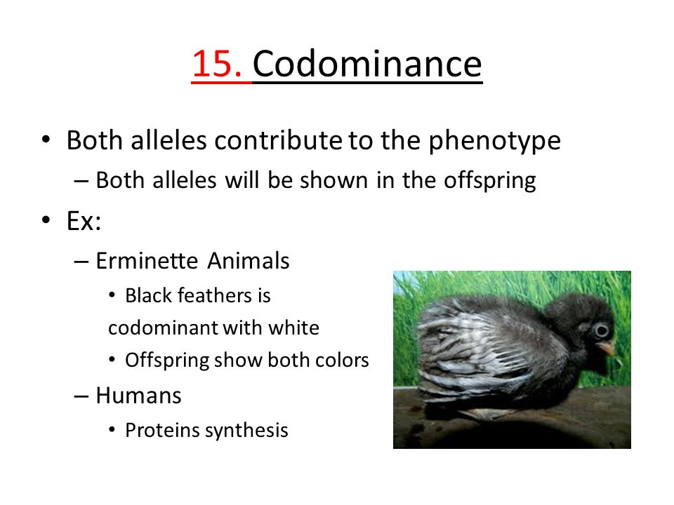 15. Codominance Both alleles contribute to the phenotype Ex: