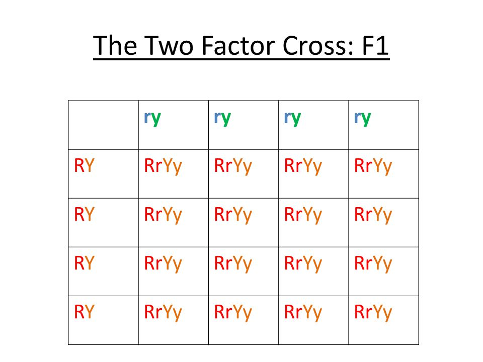 The Two Factor Cross: F1 ry RY RrYy