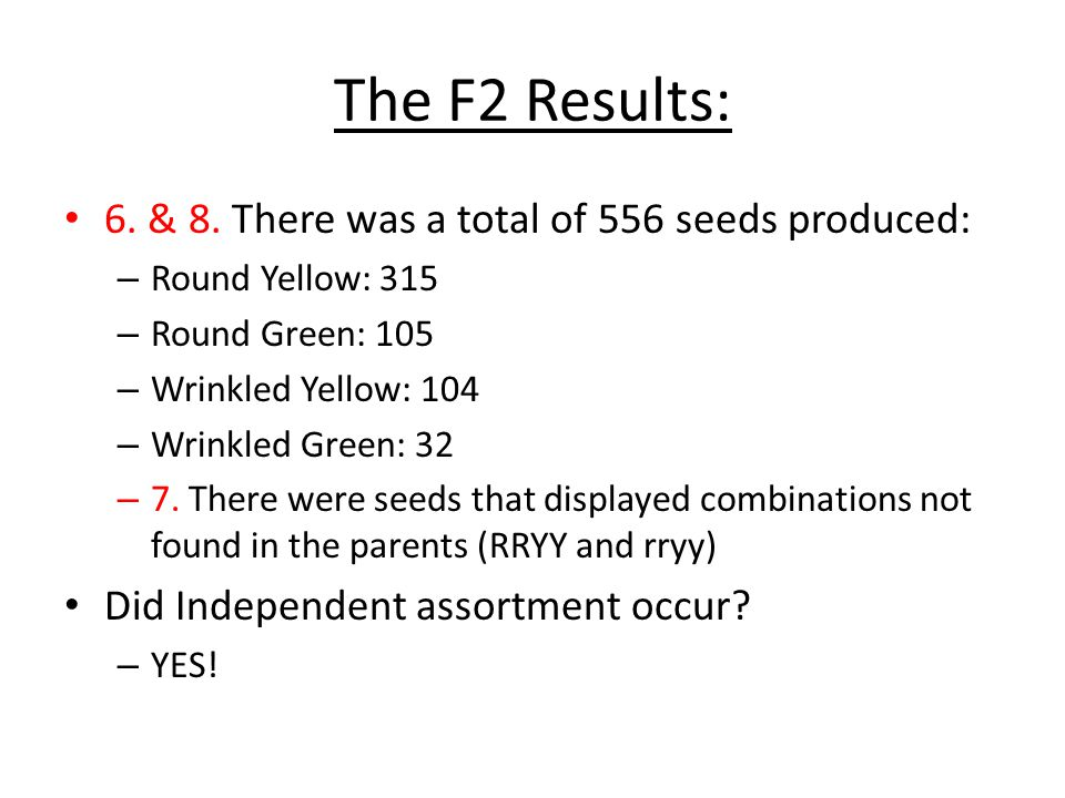 The F2 Results: 6. & 8. There was a total of 556 seeds produced: