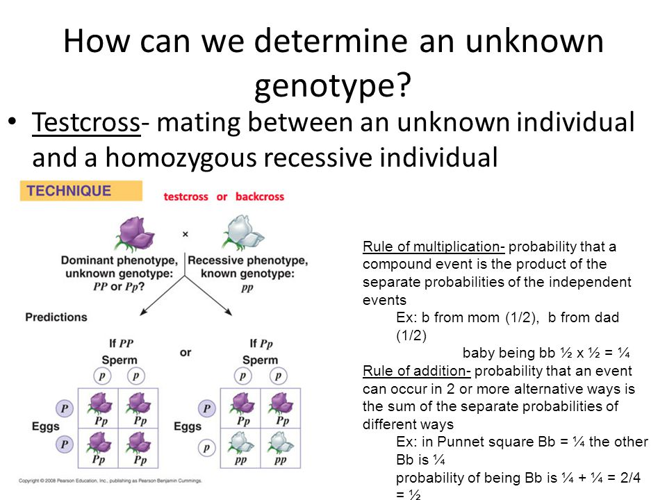 How can we determine an unknown genotype