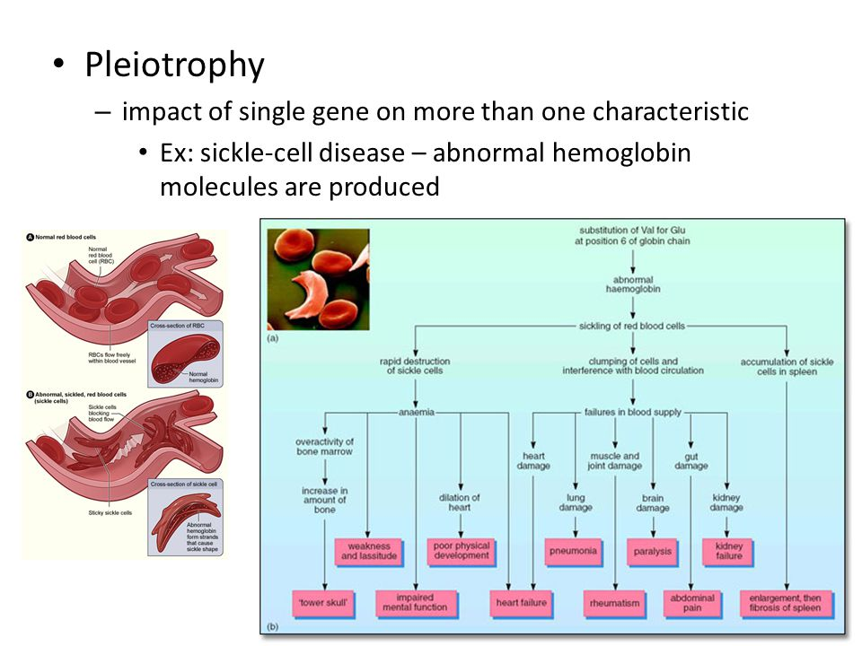 Pleiotrophy impact of single gene on more than one characteristic