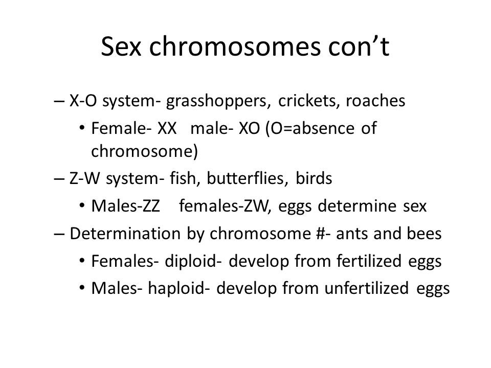 Sex chromosomes con't X-O system- grasshoppers, crickets, roaches