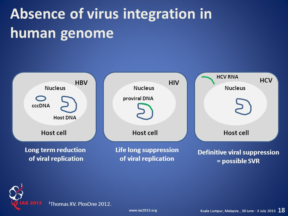 Absence of virus integration in human genome
