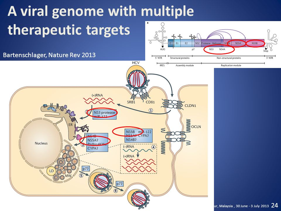 A viral genome with multiple therapeutic targets