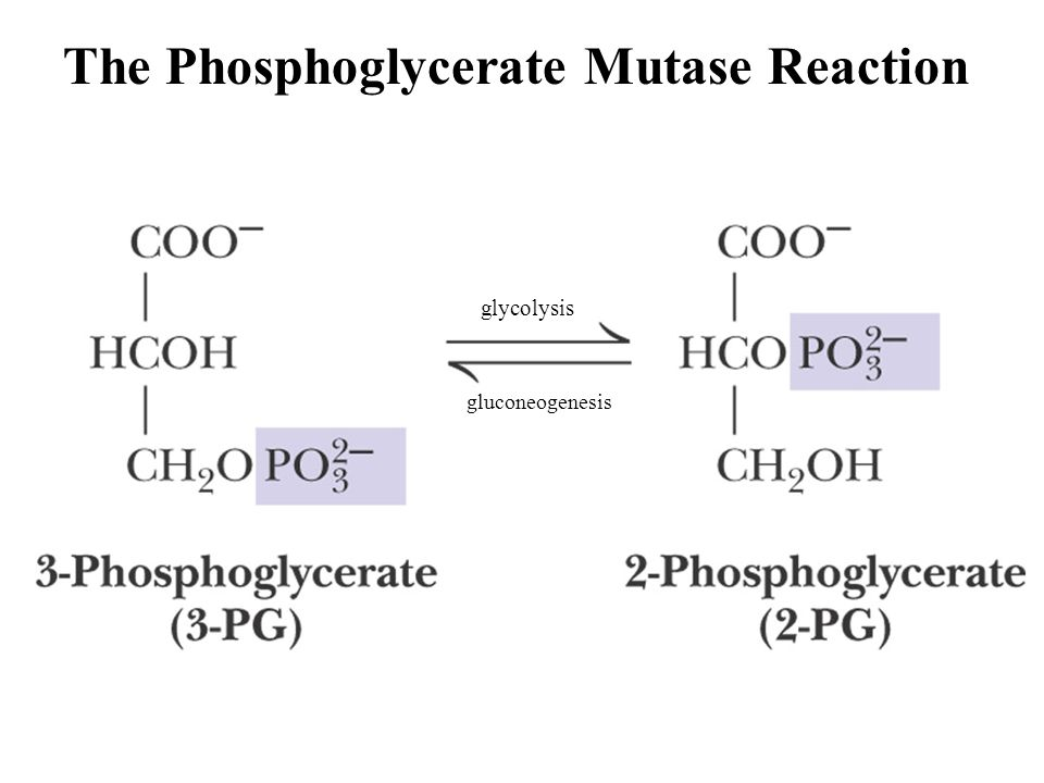 The Phosphoglycerate Mutase Reaction