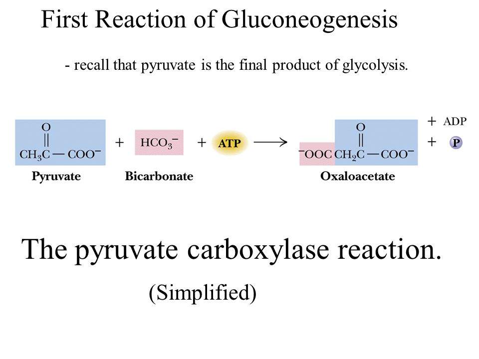 The pyruvate carboxylase reaction.