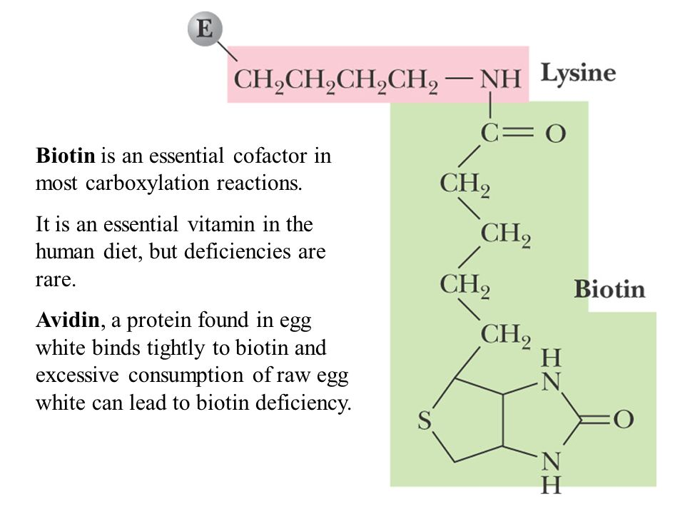 Biotin is an essential cofactor in most carboxylation reactions.