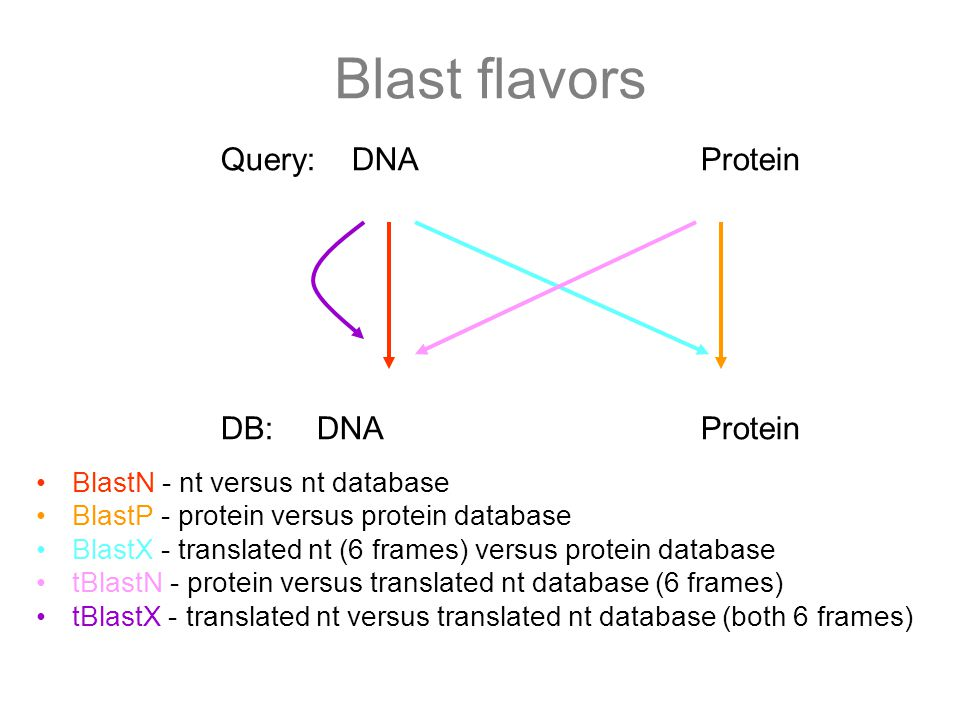 Blast flavors Query: DNA Protein DB: DNA Protein