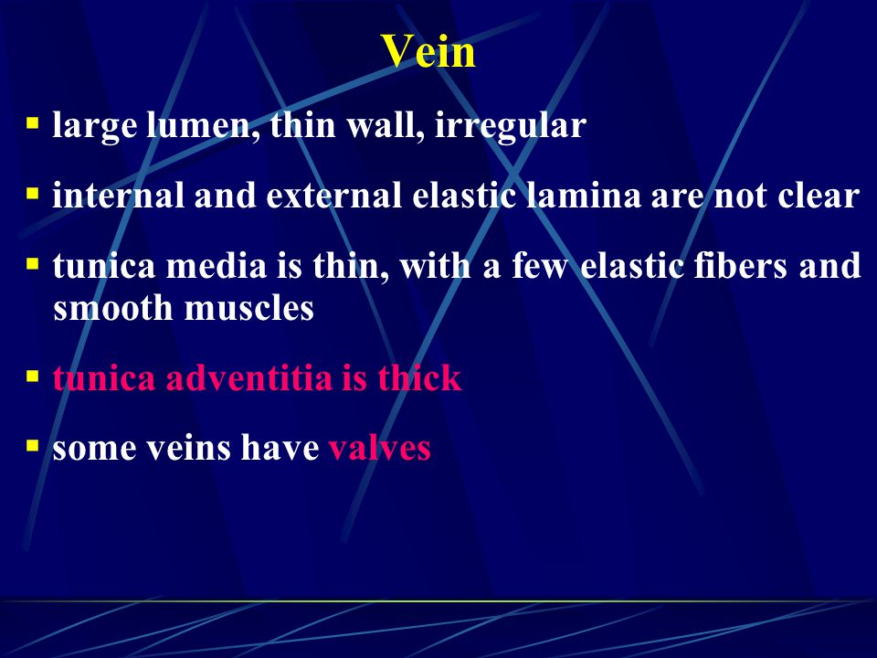 Vein large lumen, thin wall, irregular