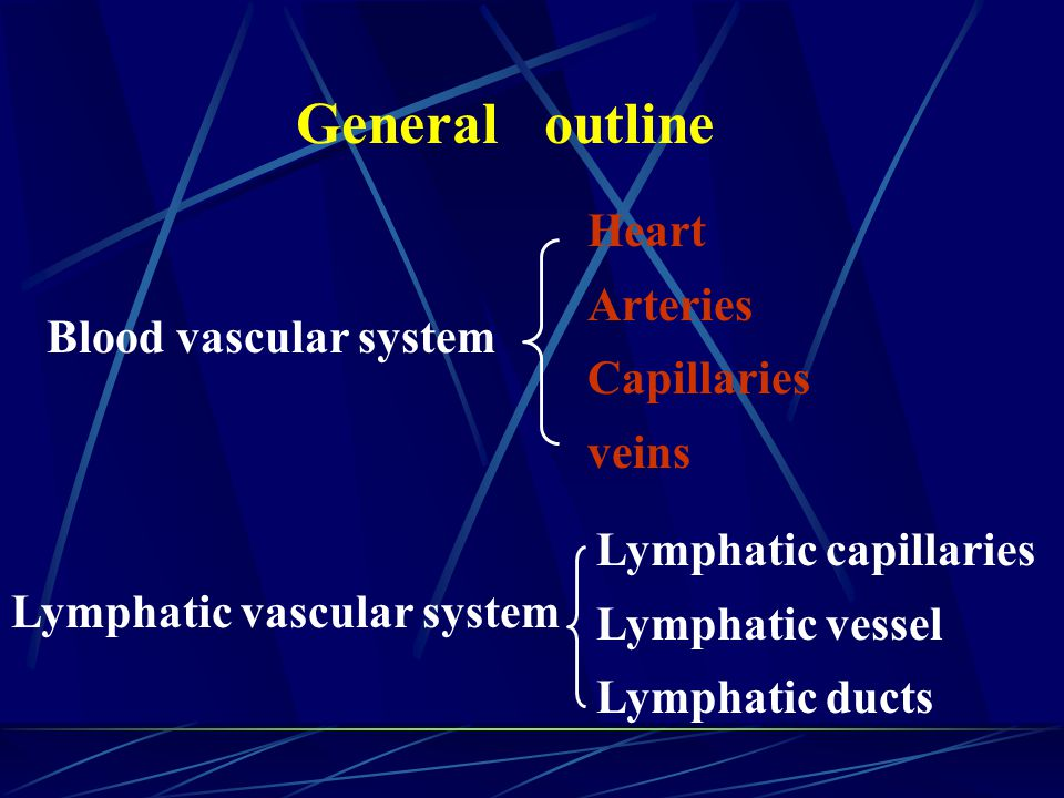 General outline Heart Arteries Capillaries veins Blood vascular system