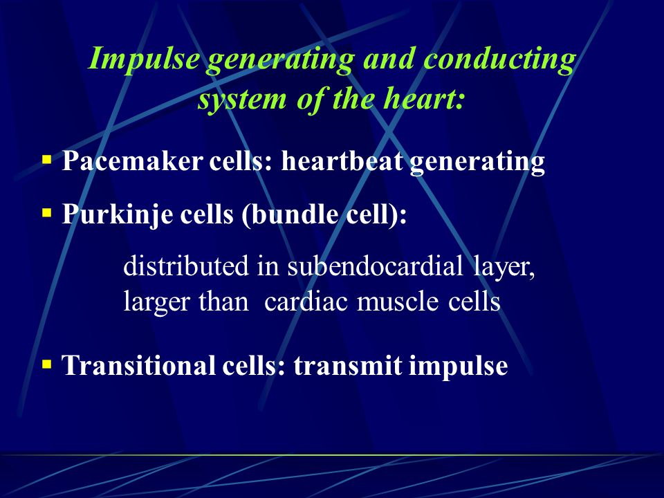 Impulse generating and conducting system of the heart:
