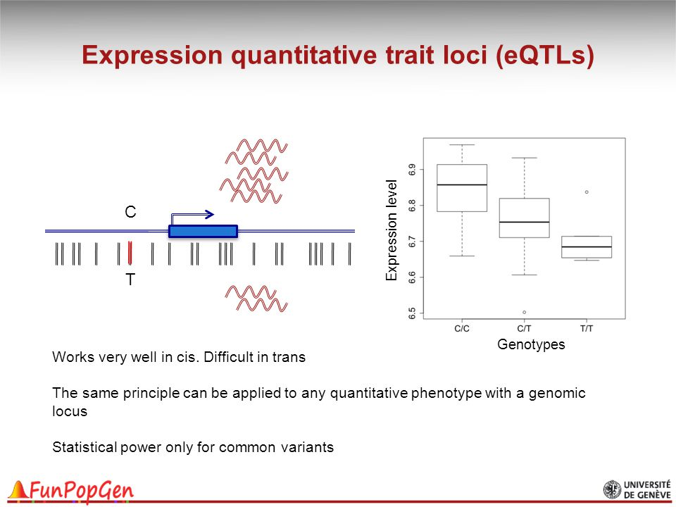 Expression quantitative trait loci (eQTLs)
