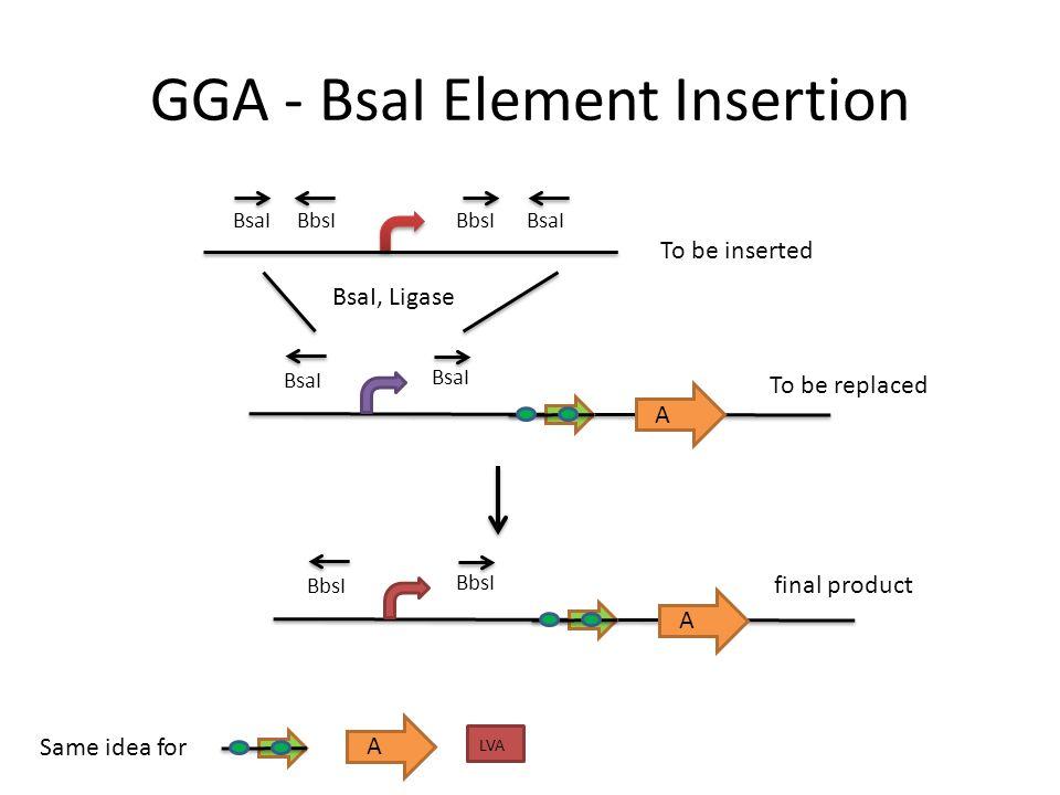 GGA - BsaI Element Insertion