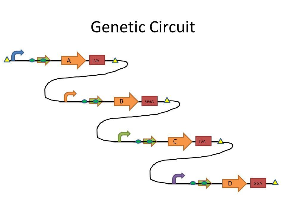 Genetic Circuit LVA A GGA B LVA C GGA D