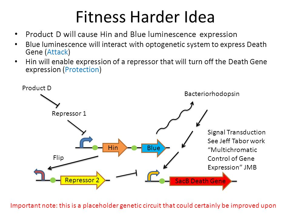 Fitness Harder Idea Product D will cause Hin and Blue luminescence expression.