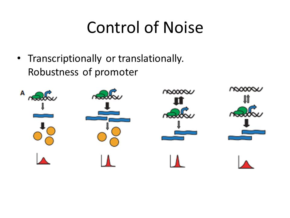 Control of Noise Transcriptionally or translationally. Robustness of promoter