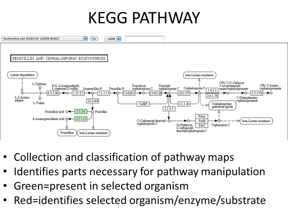 KEGG PATHWAY Collection and classification of pathway maps