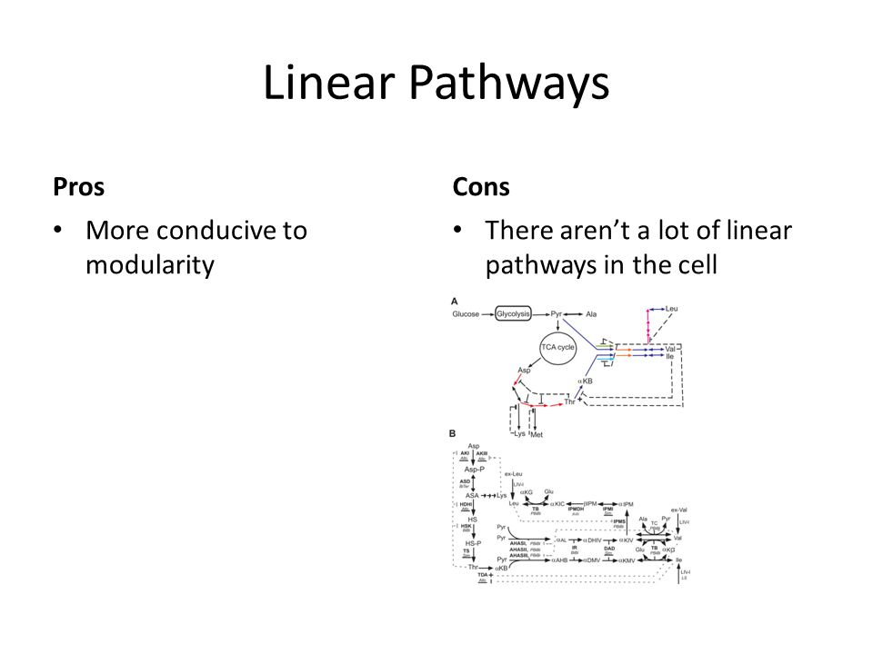 Linear Pathways Pros Cons More conducive to modularity