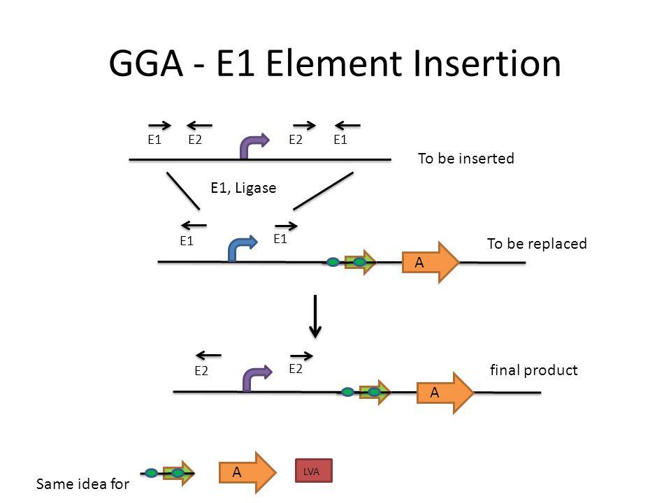 GGA - E1 Element Insertion