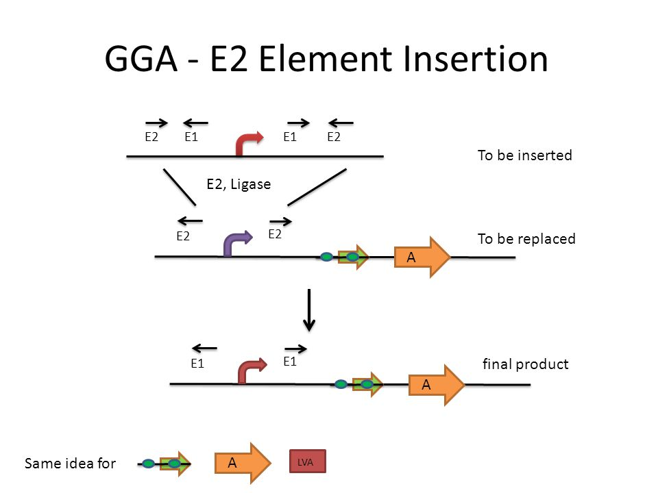 GGA - E2 Element Insertion