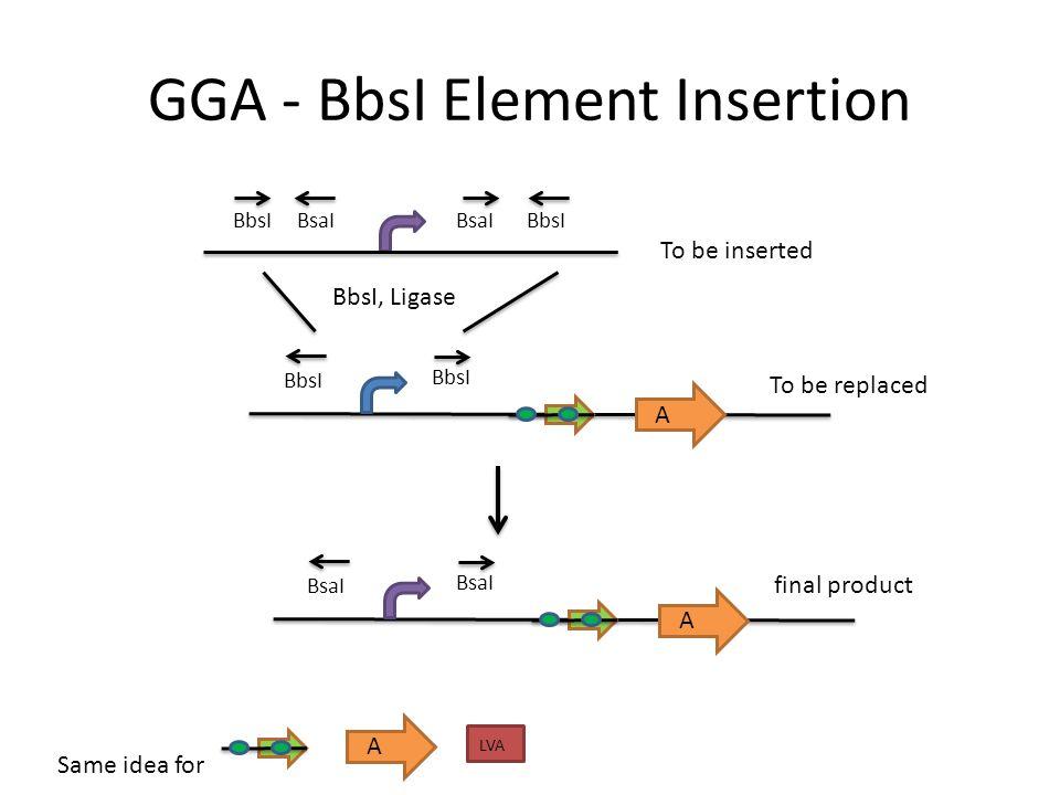 GGA - BbsI Element Insertion
