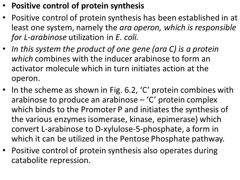 Positive control of protein synthesis