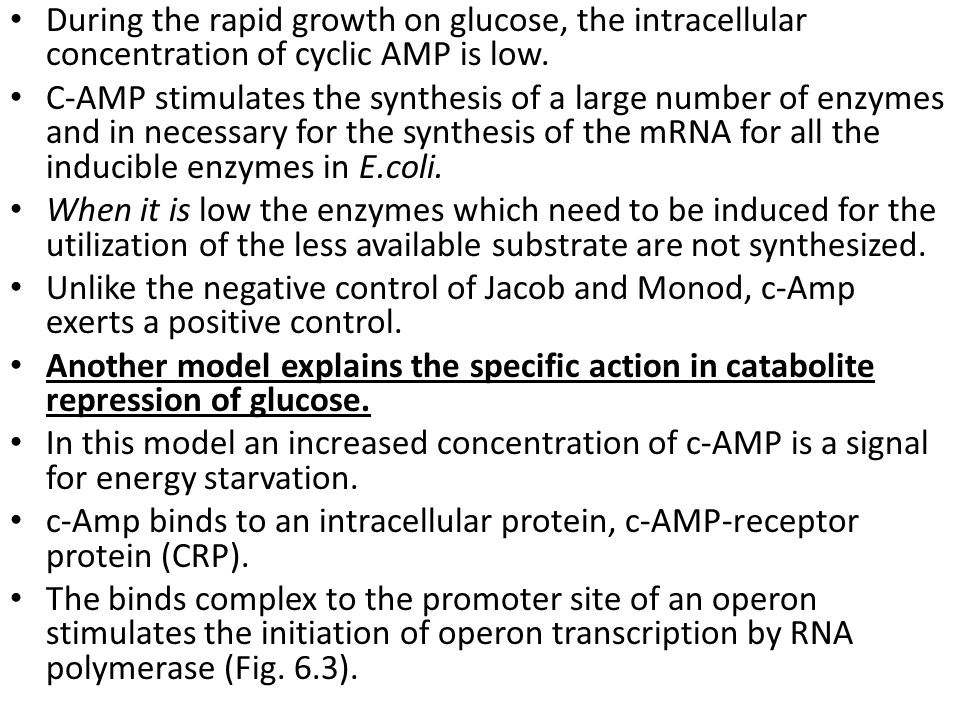During the rapid growth on glucose, the intracellular concentration of cyclic AMP is low.