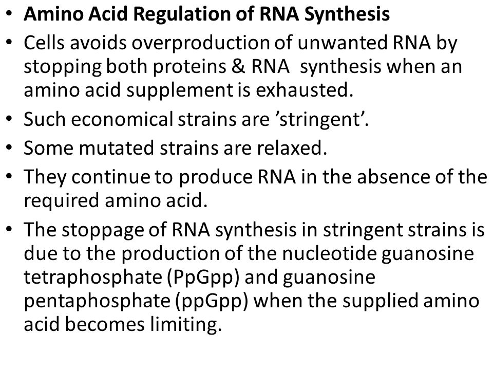 Amino Acid Regulation of RNA Synthesis