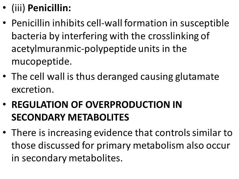 (iii) Penicillin: