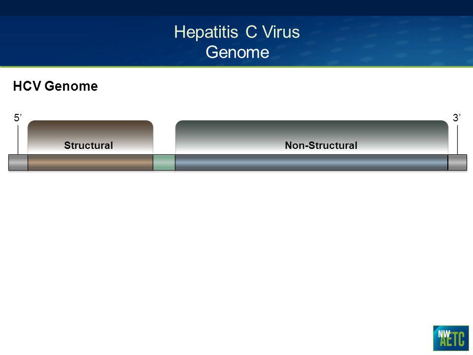 Hepatitis C Virus Genome