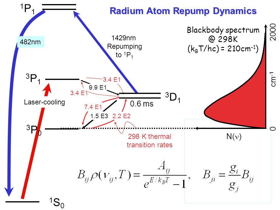 Radium Atom Repump Dynamics