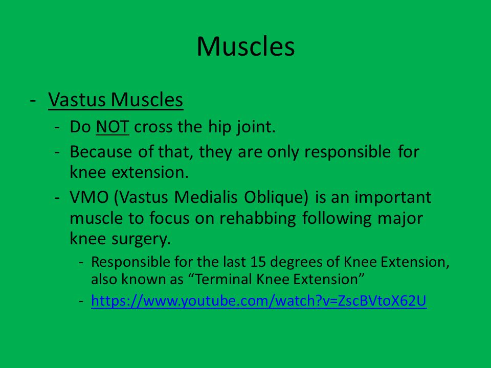 Muscles Vastus Muscles Do NOT cross the hip joint.