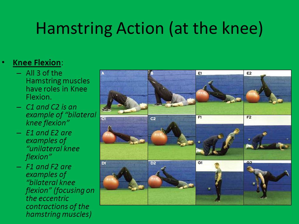 Hamstring Action (at the knee)